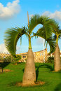 Palm Trees Royalty Free Stock Photo - 3107005
