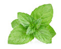 Fresh Mint Leaves Royalty Free Stock Photography - 31022617