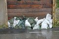 Sandbags To Protect Against Flooding Of The River During The Flo Stock Photography - 31043382