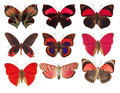 Collection Of Red Butterflies On A White Background Stock Photos - 31055623