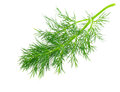 Green Dill Stock Images - 31068244