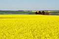 Abandoned Granaries In Canola Field Royalty Free Stock Images - 31069179