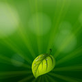 A Green Colored Stationery With A Leaf Stock Image - 31092361