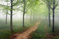 Pathway In Foggy Forest Royalty Free Stock Photos - 31107278