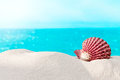 Shell On The Beach Royalty Free Stock Images - 31127649