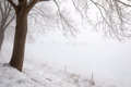 Bare And Frosty Overhanging Branches In A Wintry Landscape Royalty Free Stock Images - 31128039