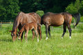 Horse Family Stock Photos - 31147683