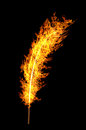 Bright Orange Flame Feather Isolated On Black Stock Photo - 31162290