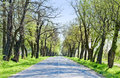Country Road With Trees Along - Beginning Of Spring Stock Photo - 31163910