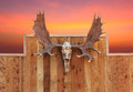 Skull Moose Hung On Wall Stock Images - 31164794