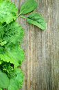 Old Wood With Lettuce, Parsley, Dill And Spinach Stock Images - 31185674