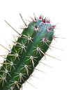 Green Cactus With Red Thorn Isolated Royalty Free Stock Photo - 31186805