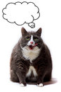 Obese Cat Thinking Stock Images - 31187044
