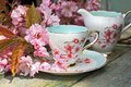 Beautiful Japanese Cherry Tree And A Cup Of Tea Royalty Free Stock Photography - 31211707