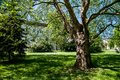 Trees In Park Royalty Free Stock Photography - 31249767