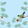Titmouse On Pine Branch Stock Image - 31263751