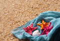 Starfishes On The Beach Royalty Free Stock Photography - 31282077