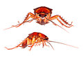 Cockroach Royalty Free Stock Images - 31300239