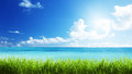 Sea And Grass Stock Images - 31335954