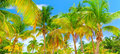 Tropical Island Background Royalty Free Stock Photo - 31337985