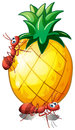Two Ants In A Pineapple Fruit Royalty Free Stock Photography - 31338857