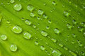 Drops On A Leaf Stock Images - 31342404