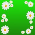 Designer Background With The Flowers Of White Color Royalty Free Stock Photography - 31346677