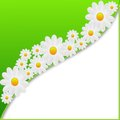 Designer Background With The Flowers Of White Color Royalty Free Stock Photos - 31346788