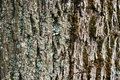Gray Bark Of Old Tree As Texture Stock Images - 31367754