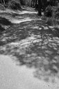 Tree Shadows Stock Images - 31373774