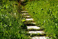 Path In The Garden Stock Photography - 3140332