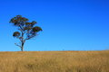 Tree On Field By Blue Sky Stock Photos - 31405653