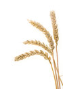 Ear Of Wheats On White Stock Photo - 31454800