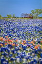 Antique Farm Equipment In A Field Of Bluebonnets Stock Photography - 31470032