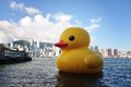 Rubber Duck Stock Photography - 31471982