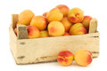 Fresh Colorful Apricots In A Wooden Crate Stock Photo - 31475430