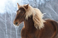 Brown Heavy Horse Portrait In Motion Stock Image - 31480261