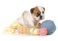Cute Puppy Stock Images - 31493444