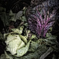 Cabbage Leaves On A Compost Heap Stock Photography - 31497392