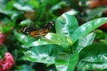 Butterfly Stock Image - 3157161