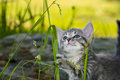Cute Kitten Playing In The Grass Stock Image - 31515061