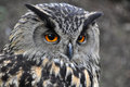Eagle Owl Stock Photography - 31533262
