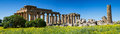 Panorama Of The Temple District, Selinunte Royalty Free Stock Photos - 31535968