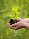 Man Hands Holding Young Plant Royalty Free Stock Photos - 31539328