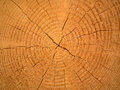Tree Rings Royalty Free Stock Image - 31552876