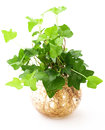 Potted Plant Stock Photography - 31555252