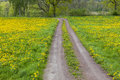Gravel Road On A Meadow Stock Photos - 31570573