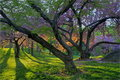 Spring In Central Park Royalty Free Stock Images - 3162429