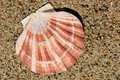 Sand And Sea Shell Royalty Free Stock Image - 3165396