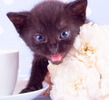 White Rose With Cute Kitten Royalty Free Stock Photos - 31610278